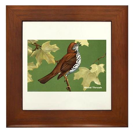 Wood Thrush Bird Framed Tile