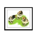 Brown Brabanter Chicks Framed Panel Print