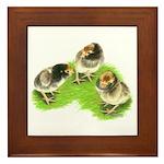 Brown Brabanter Chicks Framed Tile