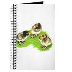 Brown Brabanter Chicks Journal