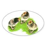 Brown Brabanter Chicks Oval Sticker