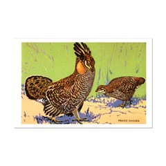 Prairie Chicken Bird Posters