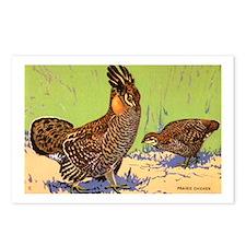 Prairie Chicken Bird Postcards (Package of 8)