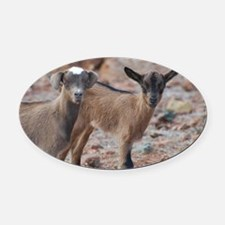 Cute Kid Goats Oval Car Magnet