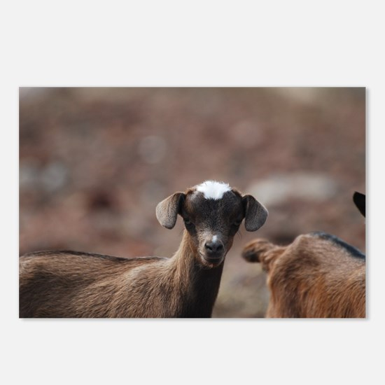 Adorable Baby Goat Postcards (Package of 8)