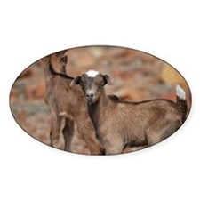 Balancing Baby Goats Decal