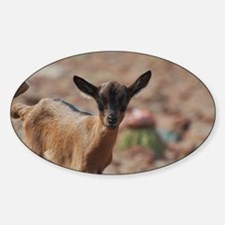 Sweet Baby Goat Sticker (Oval)