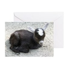 Curled Up Baby Goat Greeting Card