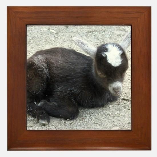Curled Up Baby Goat Framed Tile