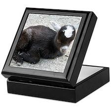 Curled Up Baby Goat Keepsake Box