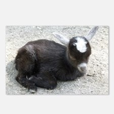 Curled Up Baby Goat Postcards (Package of 8)