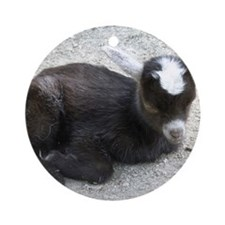 Curled Up Baby Goat Round Ornament