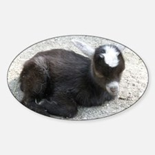 Curled Up Baby Goat Decal