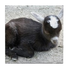 Curled Up Baby Goat Tile Coaster