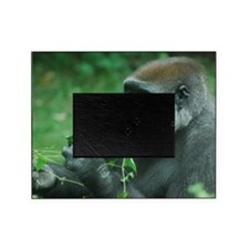Silverback Gorilla Snacking Picture Frame