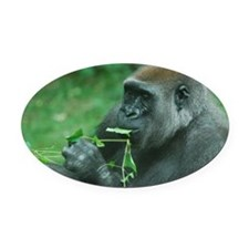 Silverback Gorilla Snacking Oval Car Magnet