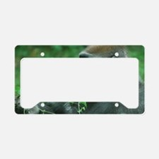 Silverback Gorilla Snacking License Plate Holder