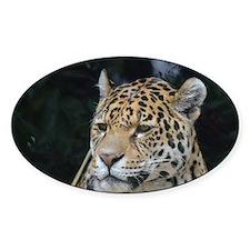 Solemn Jaguar Decal