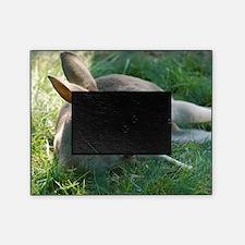 Kangaroo Sleeping Picture Frame