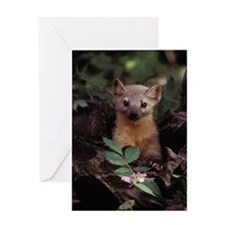 Marten Greeting Card