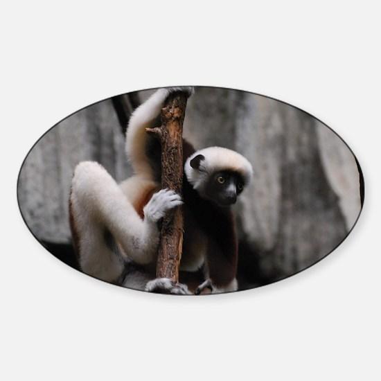 Climbing Safika Lemur Sticker (Oval)