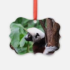 Profile of a Safika Lemur Ornament