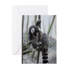 Ringtailed Lemur Greeting Card