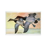 Canvasback Duck Rectangle Magnet (10 pack)