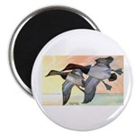Canvasback Duck Magnet