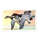 Canvasback Duck Postcards (Package of 8)