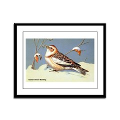 Eastern Snow Bunting Bird Framed Panel Print