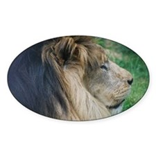 Sleeping Lion Decal
