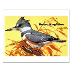 Belted Kingfisher Bird Posters