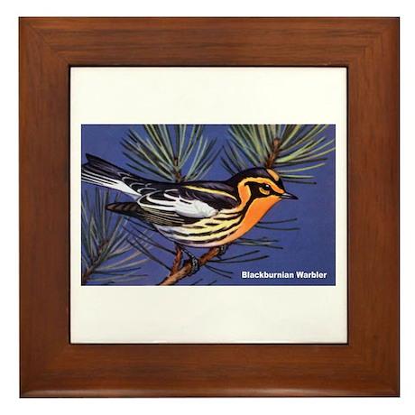 Blackburnian Warbler Bird Framed Tile