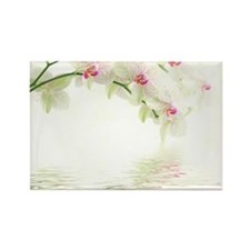 White Orchids Rectangle Magnet (100 pack)