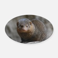 Cute Dwarf Mongoose Oval Car Magnet