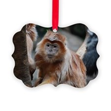 Funny Faced Red Langur Monkey Ornament