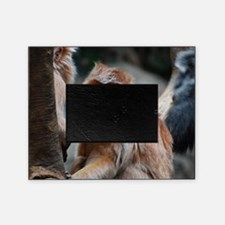 Funny Faced Red Langur Monkey Picture Frame