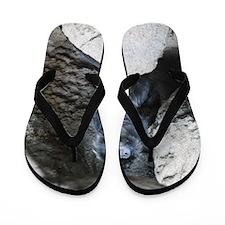 Ebony Langur  Flip Flops