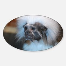 Cotton Topped Tamarin Monkey Decal
