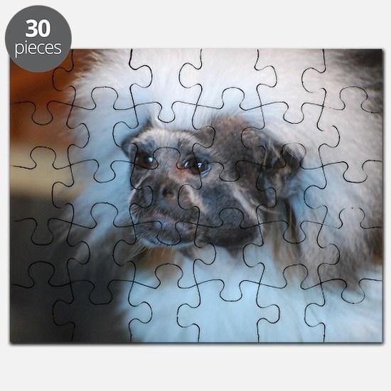 Cotton Topped Tamarin Monkey Puzzle