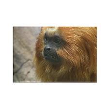 Golden Lion Tamarin Monkey Rectangle Magnet