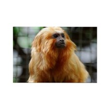 Adorable Red Tamarin Monkey Rectangle Magnet