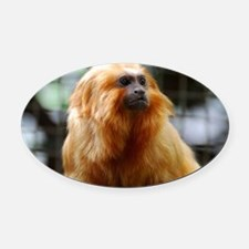 Adorable Red Tamarin Monkey Oval Car Magnet