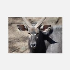 Face of a Male Nyala Rectangle Magnet