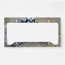 Osprey Bird License Plate Holder