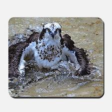Osprey Bird Mousepad
