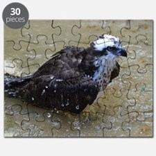 Osprey in the Shallows Puzzle