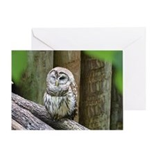 Cute Little Owl Greeting Card