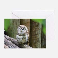 Cute Little Owl Greeting Card